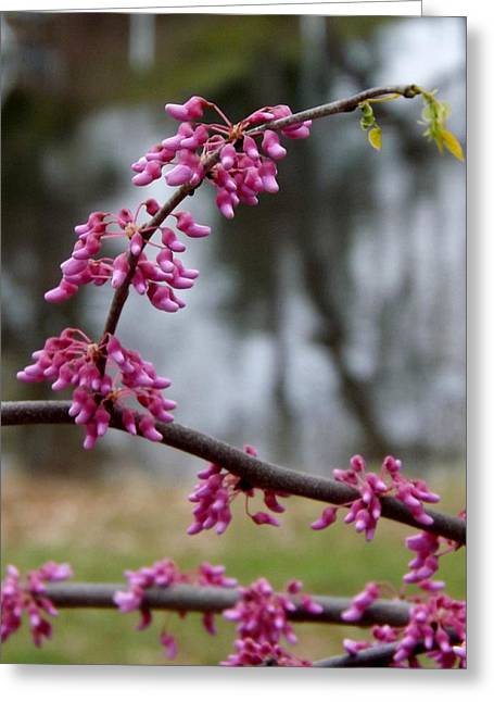 Greeting Card featuring the photograph Flowering Tree 1 by Gerald Strine