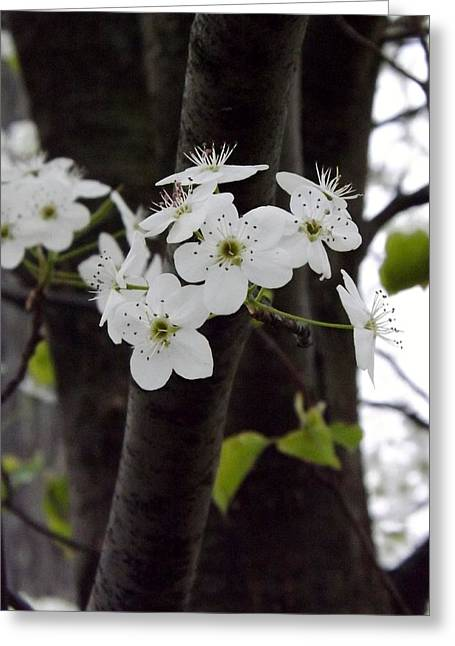 Greeting Card featuring the photograph Flowering Tree 4 by Gerald Strine