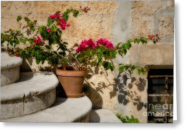Flowerpot On Stairs In Kocura Croatia Greeting Card