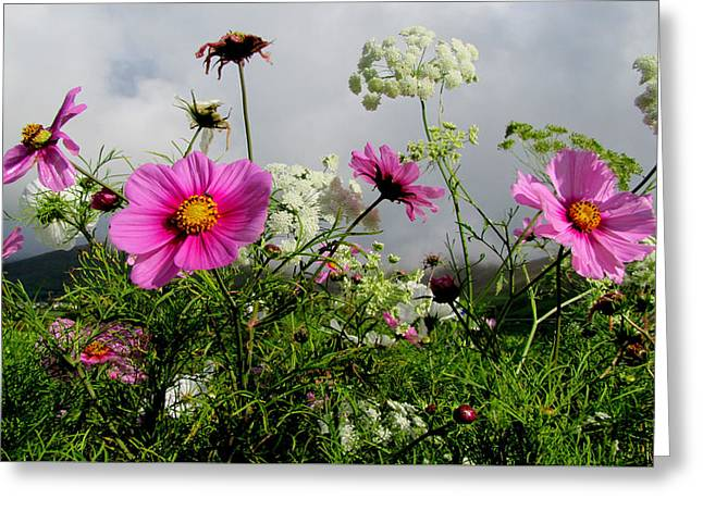 Greeting Card featuring the photograph Flowers by Barbara Walsh