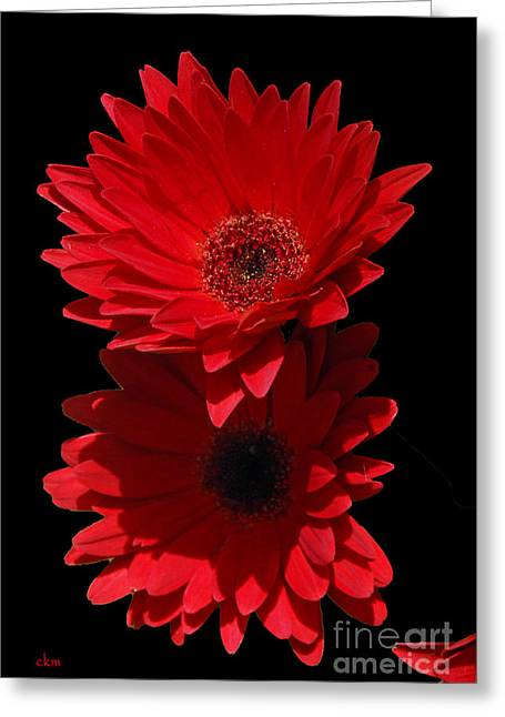 Greeting Card featuring the photograph Flowers From My Son by Cindy Manero