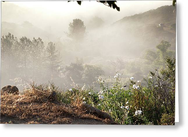 Flowers In The Mist Greeting Card