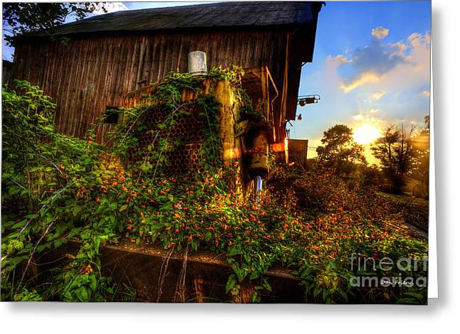 Flowers On Old Bulldozer Sunset Greeting Card by Dan Friend