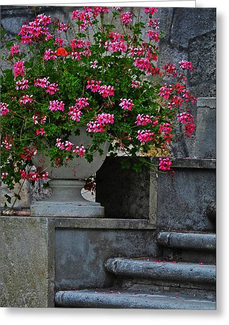 Flowers On The Steps Greeting Card