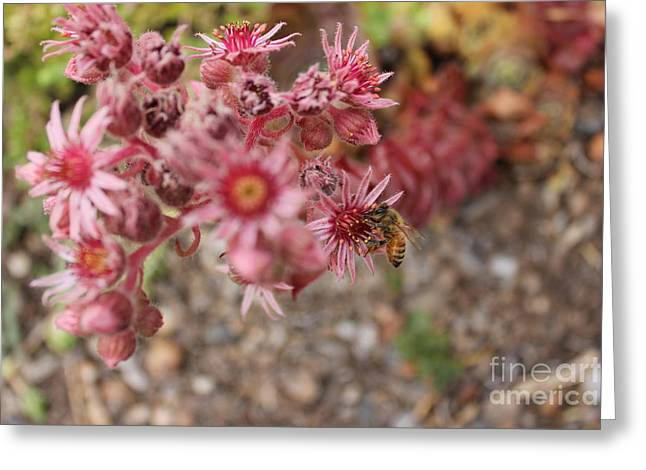 Flowers With Bee Greeting Card