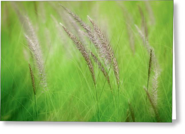 Flowing Reeds Greeting Card
