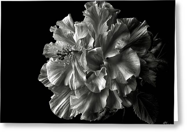 Fluffy Hibiscus In Black And White Greeting Card