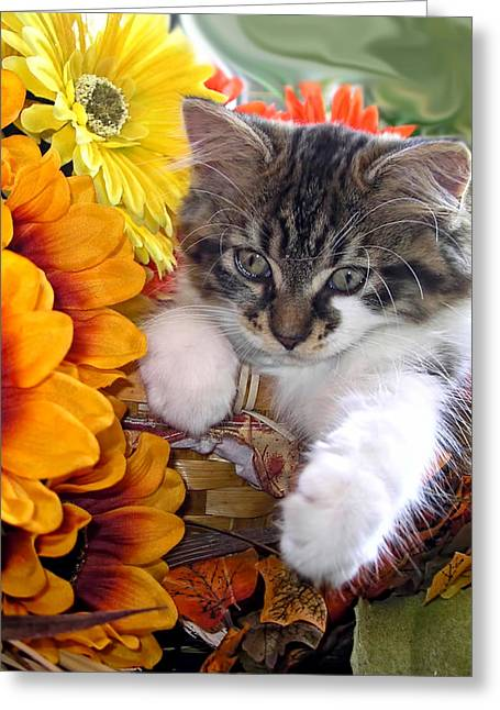 Fluffy Kitten Staring At A Mouse - Cute Kitty Cat In Fall Autumn Colours With Gerbera Flowers Greeting Card by Chantal PhotoPix