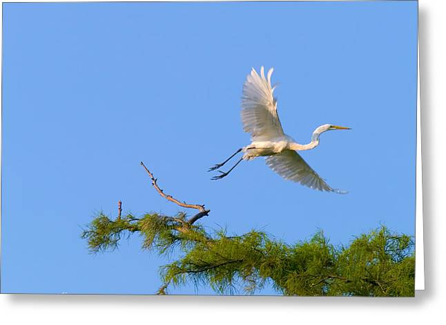 Fly Away Egret Greeting Card