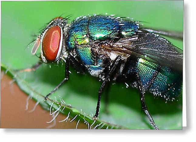 Fly Greeting Card by Michelle Armstrong
