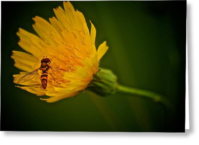 Fly On A Flower Greeting Card