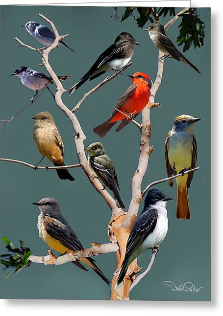 Flycatcher Collage Greeting Card by David Salter