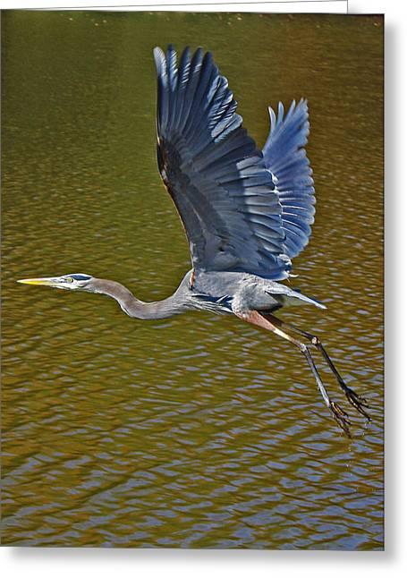 Flying Blue Heron Greeting Card