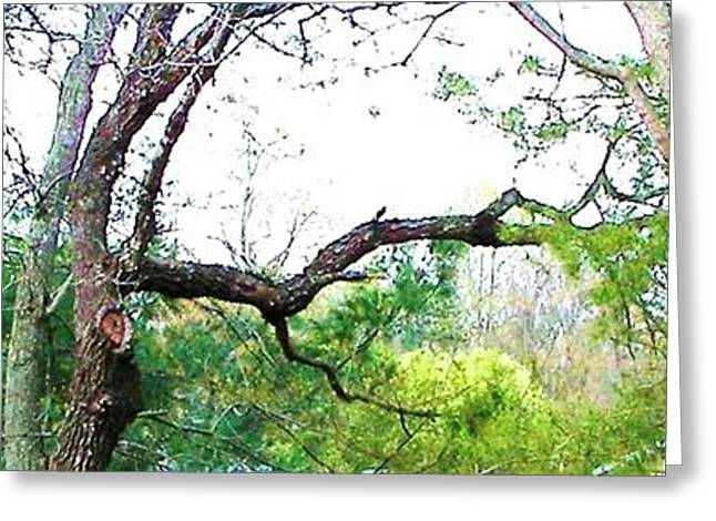 Greeting Card featuring the photograph Flying Branch by Pamela Hyde Wilson