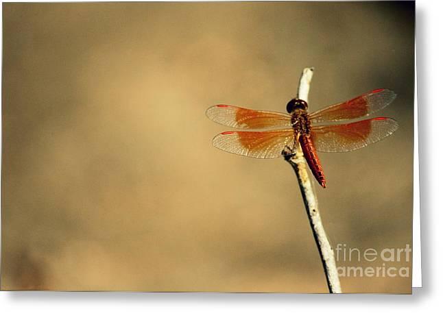 Flying Colours Greeting Card by Vishakha Bhagat