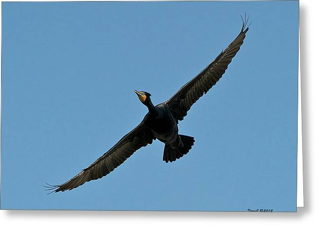 Greeting Card featuring the photograph Flying Cormorant by Stephen  Johnson