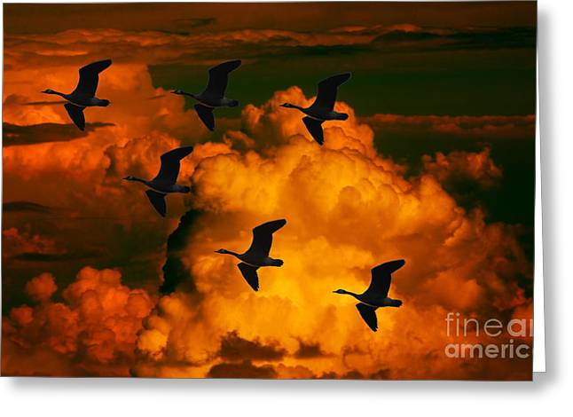 Flying High In The Sky Greeting Card