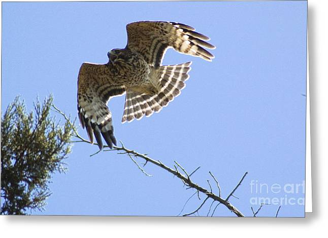 Greeting Card featuring the photograph Flying High by Johanne Peale