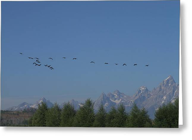 Flying In Formation Greeting Card