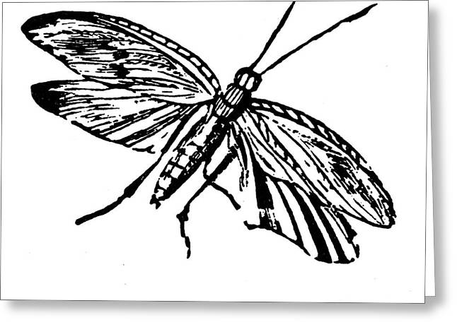 Flying Insect Greeting Card by Granger