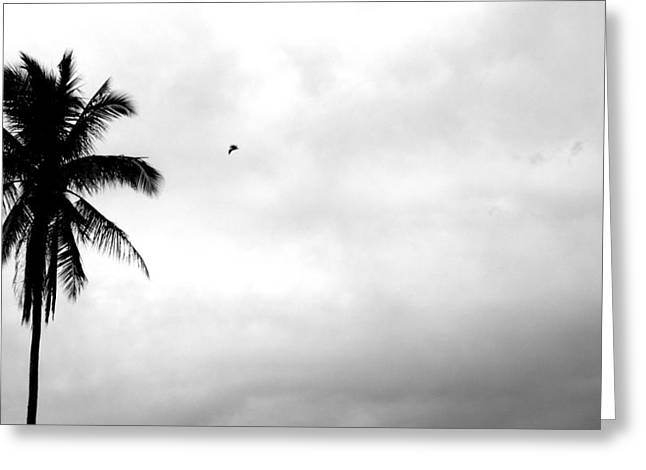 Flying-off From Palm Tree Greeting Card by Rosvin Des Bouillons
