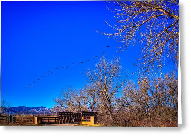 Flying Over South Platte Park Greeting Card by David Patterson