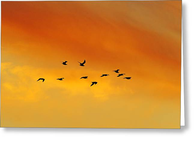 Flying To The Roost Greeting Card by Tony Beck