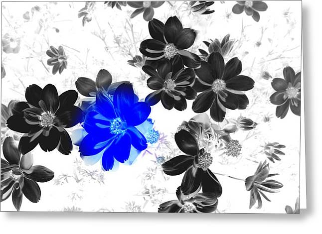 Focal Black And White Beauty Greeting Card by Kim Galluzzo Wozniak