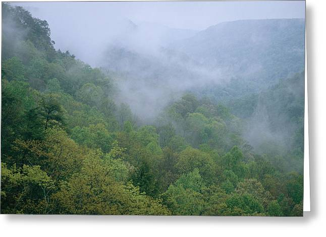Fog Drifts Across A Cove In Tennessee Greeting Card by Stephen Alvarez