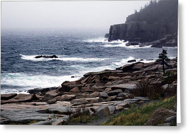 Fog In Acadia Greeting Card by Skip Willits