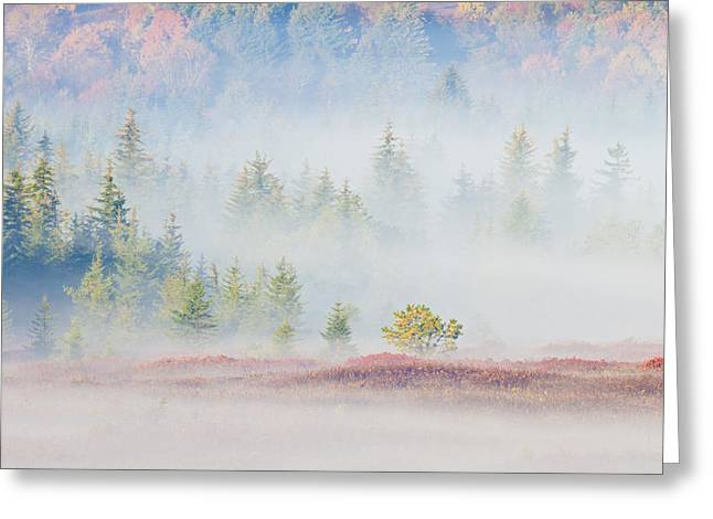 Fog In The Valley At Dolly Sods West Vriginia Greeting Card by Bill Swindaman