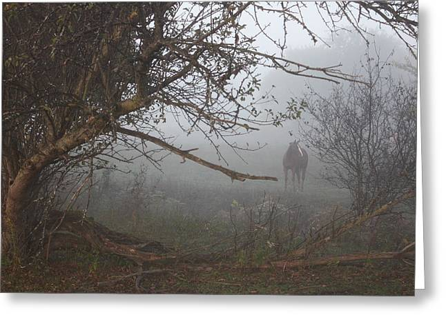 Foggy Horse Greeting Card