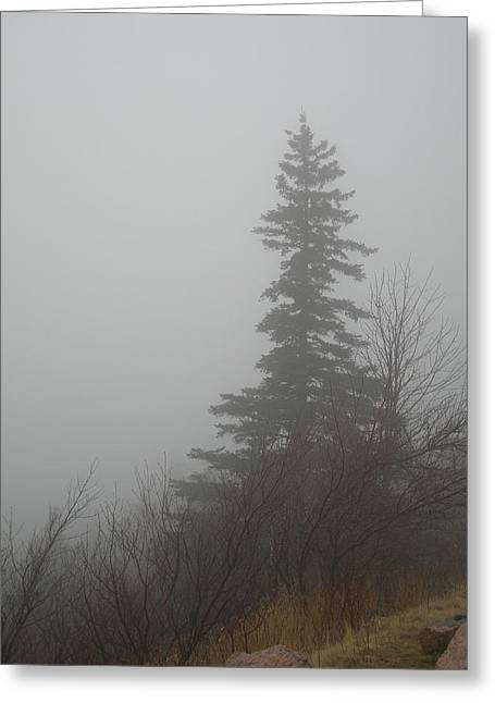 Foggy Sentinel Greeting Card by Skip Willits