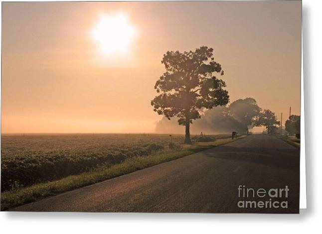 Foggy Sunrise On Soybean Field Greeting Card