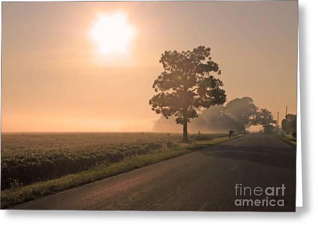 Foggy Sunrise On Soybean Field Greeting Card