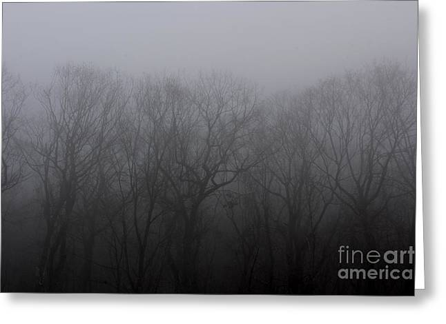 Foggy Treeline Greeting Card by Lee Dos Santos