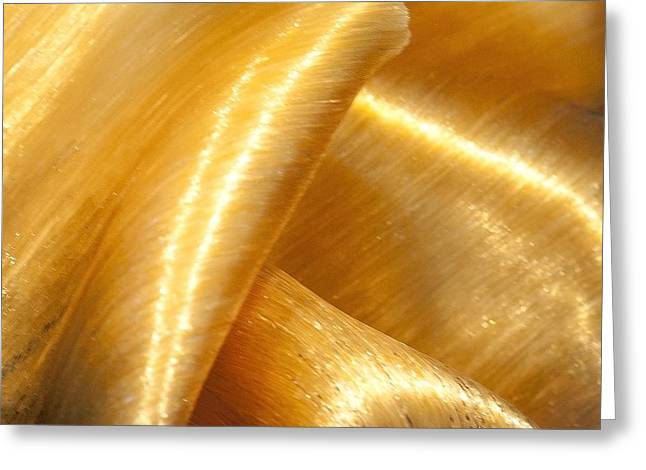 Greeting Card featuring the photograph Folding Gold by Artist and Photographer Laura Wrede