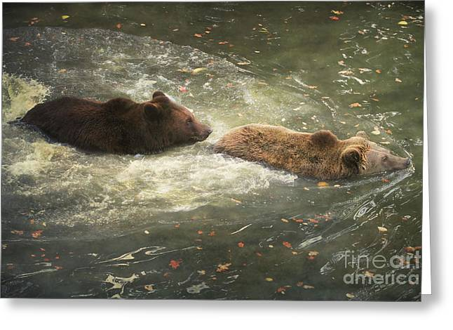 Follow Me Greeting Card by Roy  McPeak