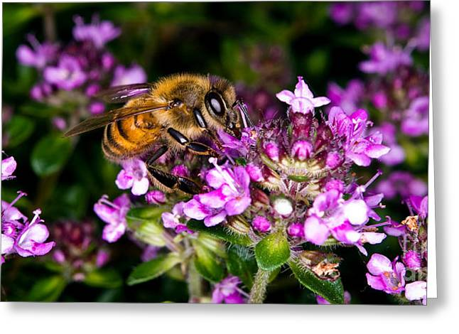Follow The Bee Greeting Card by Terry Elniski