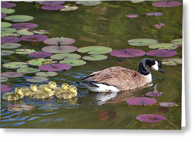 Greeting Card featuring the photograph Follow The Goose by Mary Zeman