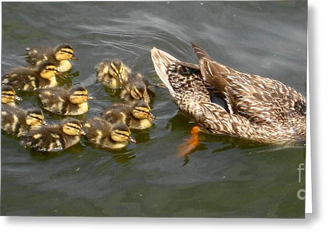 Follow The Leader Greeting Card by Denise Hopkins