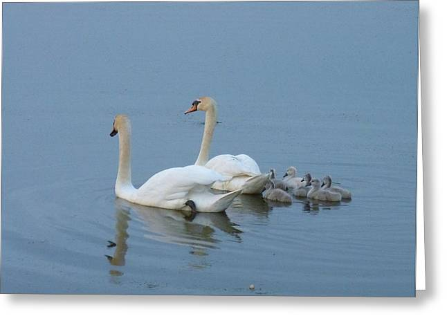 Following Mommy And Daddy Greeting Card by Jeanette Oberholtzer