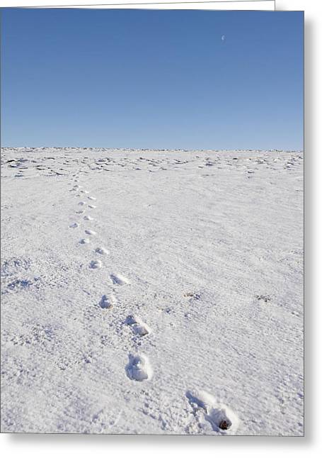 Footprints In Snow Greeting Card by Duncan Shaw