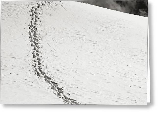 Footprints Greeting Card by Konstantin Dikovsky