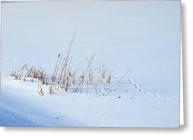 Footprints On Snow Greeting Card by Paul Ge