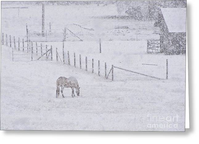 Foraging In The Snow Greeting Card by Sean Griffin