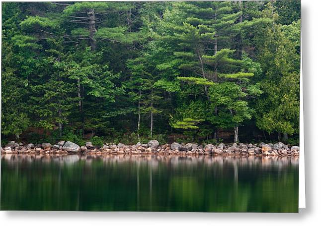 Forest At Jordan Pond Acadia Greeting Card