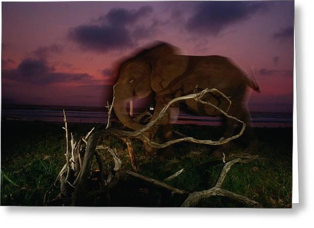 Forest Elephant, Loxodonta Africana Greeting Card by Michael Nichols