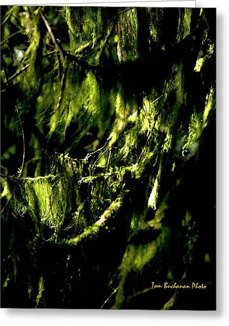 Forest Gloom Greeting Card by Tom Buchanan
