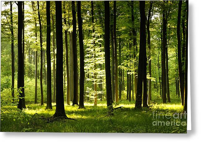 Forest Idyll Greeting Card by Renate Knapp